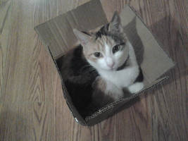 If I fits, I sits. by chicosredhead