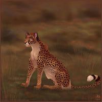 What do you See Cheetah by balaa