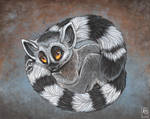 Lemur Baby by balaa