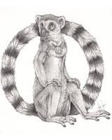 The Lemur King by balaa