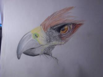 Eagle progress by ShinaDragon