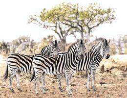 African Bush Scene by Hunkinart