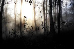 Forest 2 by kiskocka