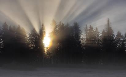 Foggy morning by Timosetae