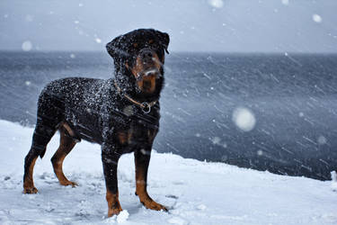 Snowing by Timosetae