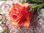 Rose276 by alealara