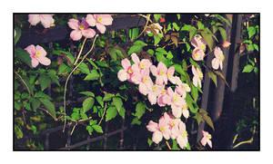 pink by Fr34kZ