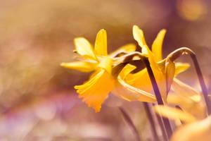 Yellow by Fr34kZ