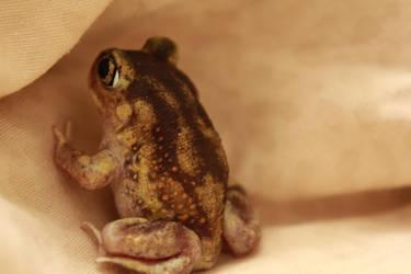 Mini Toad II by create-a-name-dotcom