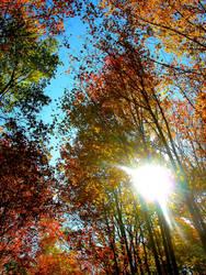 Autumn Colors by AdamChristopherRudd
