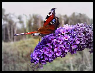 Peacock Butterfly by Tamakin