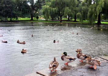 Me Duckies by donrufie