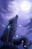 Wolf by danielbogni