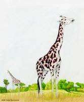 Giraffa jumae by RSNascimento