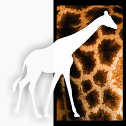Leopard Camel by RSNascimento