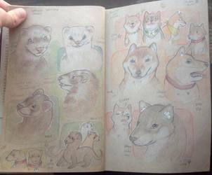 Shiba Inus and Weasels by TripleTartArt3