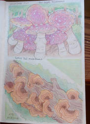 Mushrooms by TripleTartArt3