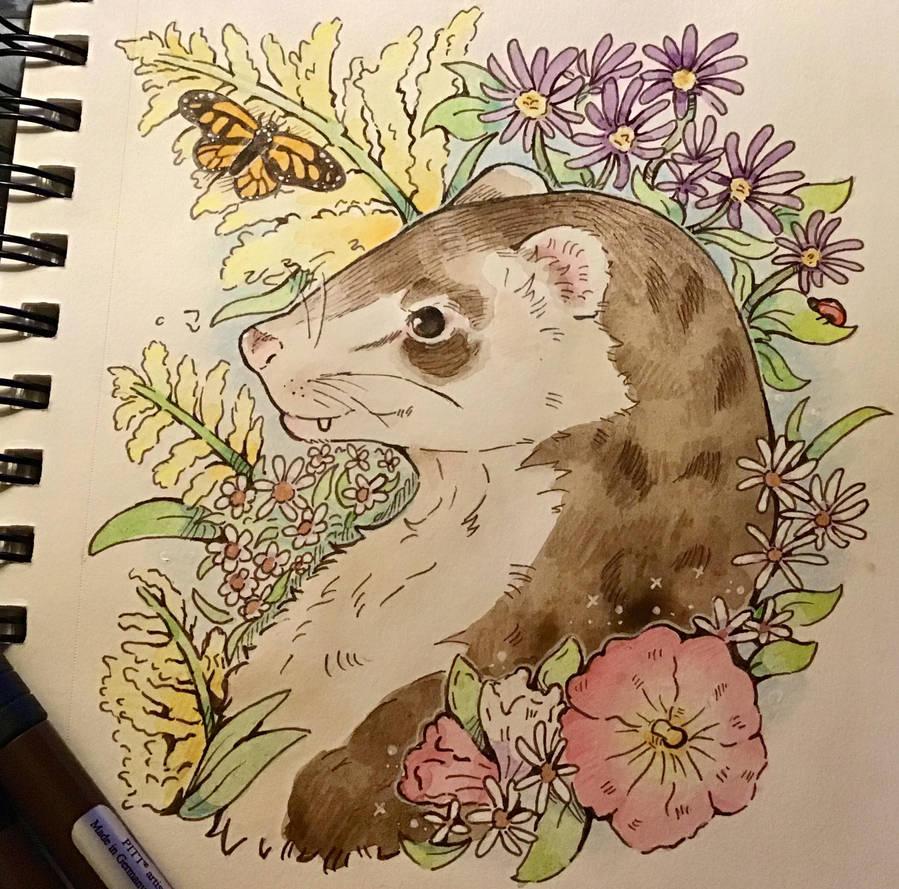 Ted The Little Ferret Friend. Day 3# by TripleTartArt3