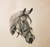 Horse sketch by weestby