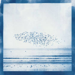 Birds by LuxLucie