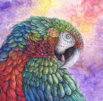Shamrock Macaw2 by dawndelver