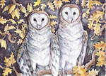 Oak Tree Owls by dawndelver