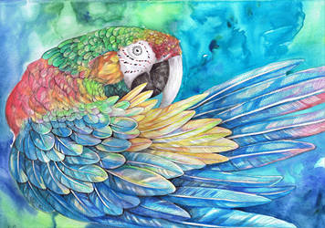 Rainbow Macaw by dawndelver