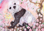 Panda in Blossom by dawndelver