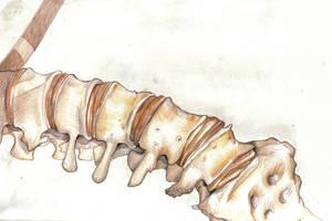 Illustration of Human Spine by dawndelver