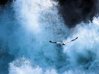 White stork by jcolimbo34