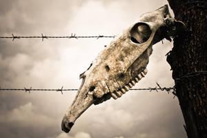 Death. by Floripon