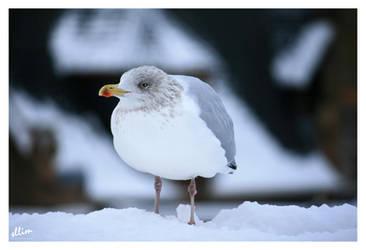 Sea Gull by sllim