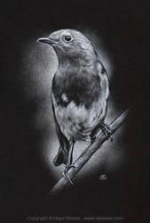 Robin by Crynyd