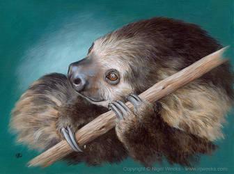 Sloth by Crynyd