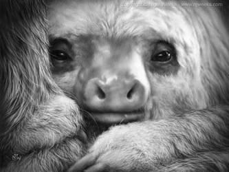 Baby Sloth by Crynyd