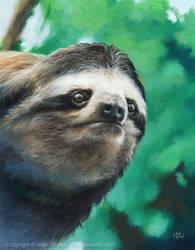Sloth 2 by Crynyd