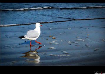 Yeppon Seagull by cherryjess