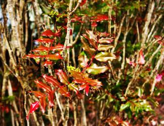 colors, II by Kiota