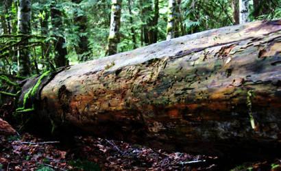 fallen tree by Kiota