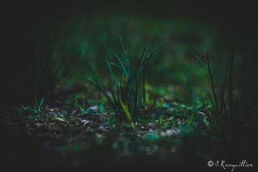 Lonely amongst trees by sierra223