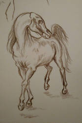 Horse1 by LeszkaKsawery