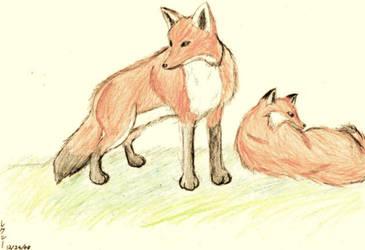 Fox Drawing by Seliex