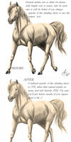 Horse template - guideline by Shekla