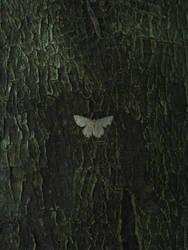 moth by Hide-n-seek