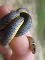snake by Allison-inlove