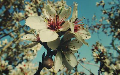 Blossom And Bud by PornuriMajid