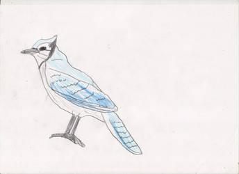 Blue Jay #2 by adampanak