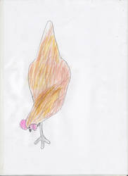 Chicken by adampanak