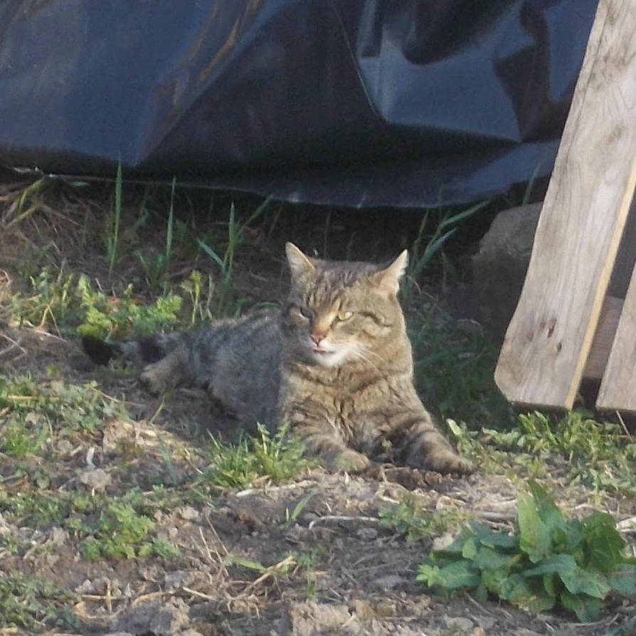Cat by adampanak
