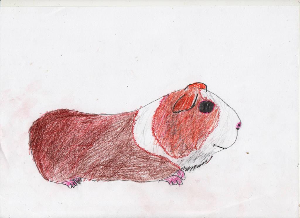 Guinea Pig by adampanak